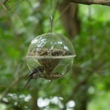 Hanging Wild Bird Feeder, Crystal Clear Acrylic